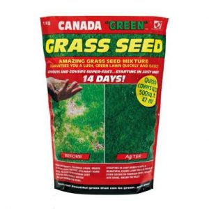 Canada Green Grass Seed 1Kg 47 Square Metres Coverage